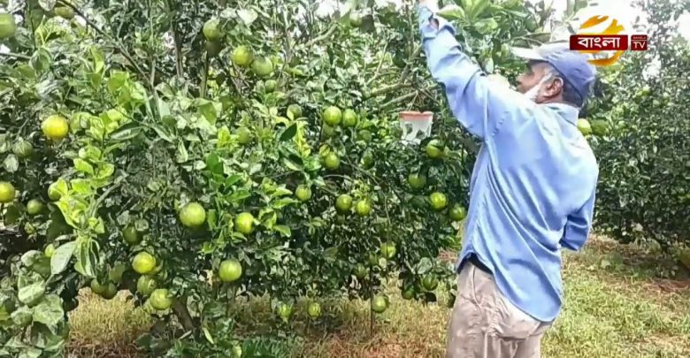 Malta Fruit