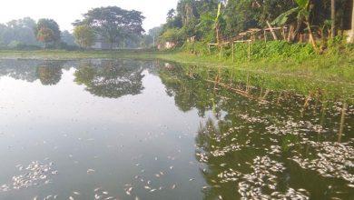 Photo of আখাউড়ায় বিষ প্রয়োগে মাছ নিধন
