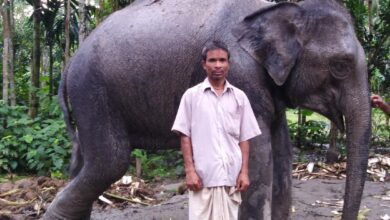 Photo of স্ত্রীর স্বপ্ন পূরণে ১৬ লাখ টাকায় হাতি কিনলেন কৃষক!